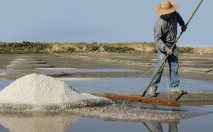 7762956001 la recolte du gros sel a guerande