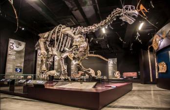 Camasaurus 3