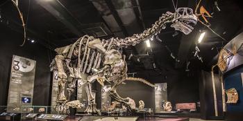 Camasaurus