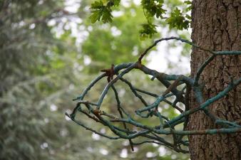Couronne d arbre et chaos